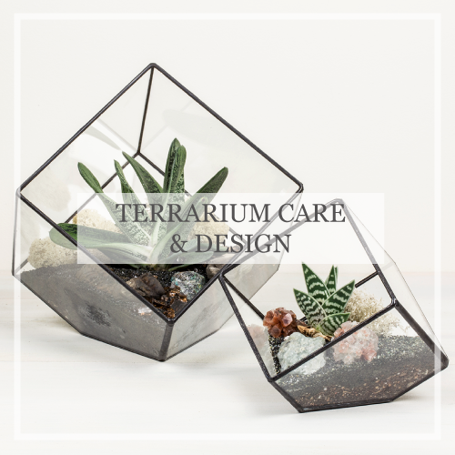 Terrarium Care & Design