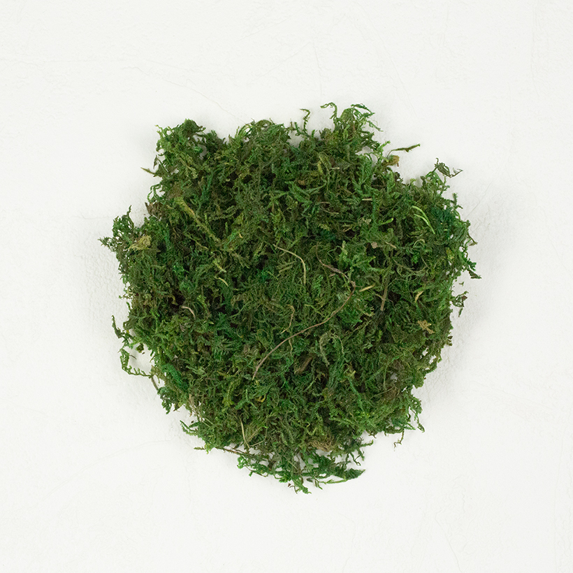 SuperMoss Mountain Moss Preserved