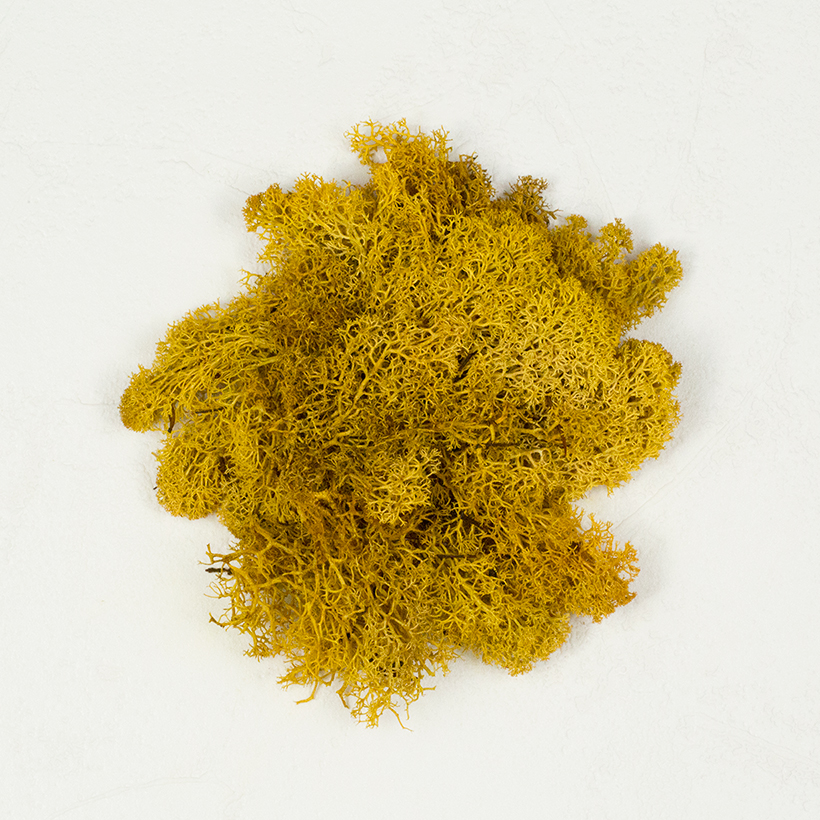 SuperMoss Reindeer Moss Mango