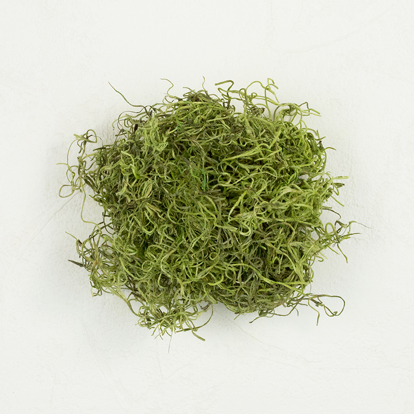 SuperMoss Spanish Moss Preserved Basil