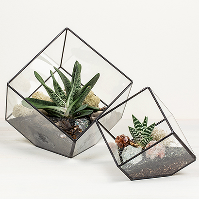 Terrariums & Vessels